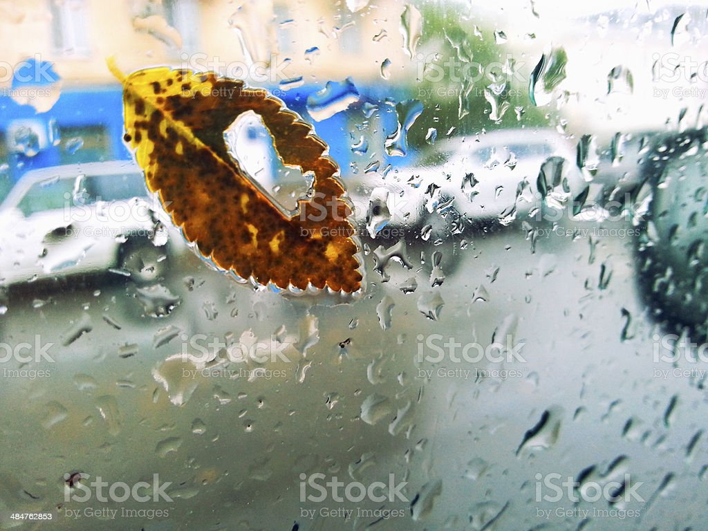 maple leaf on glass with natural water drops royalty-free stock photo
