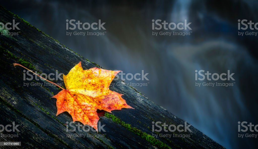 Maple leaf on top of tree trunk over stream stock photo