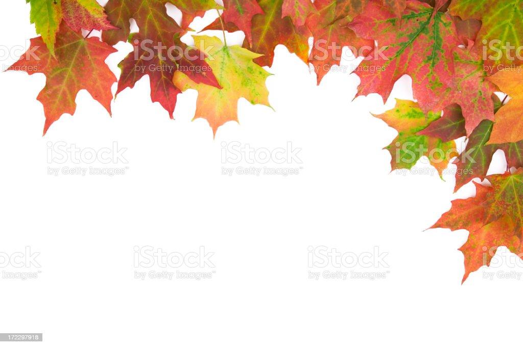 Maple leaf (XL) royalty-free stock photo