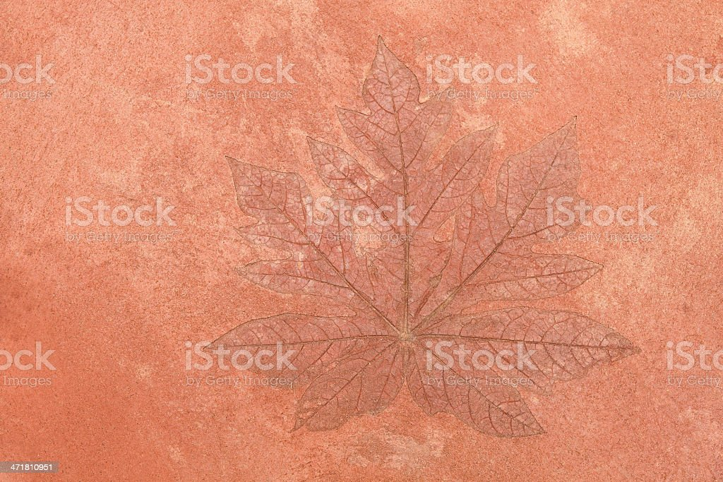 Maple leaf texture on the floor royalty-free stock photo