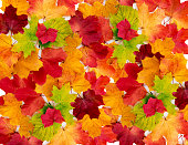 Maple leaves background.