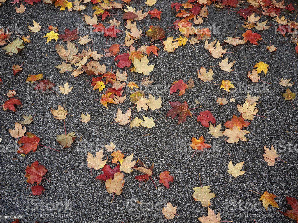 Maple Leaves Forever royalty-free stock photo