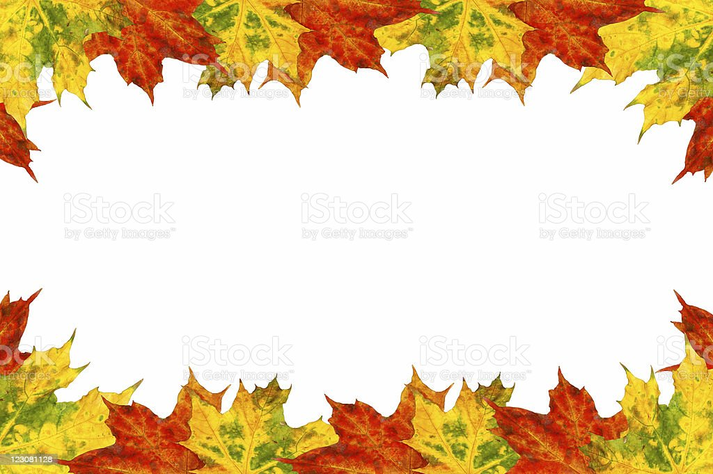 Maple leaves frame stock photo
