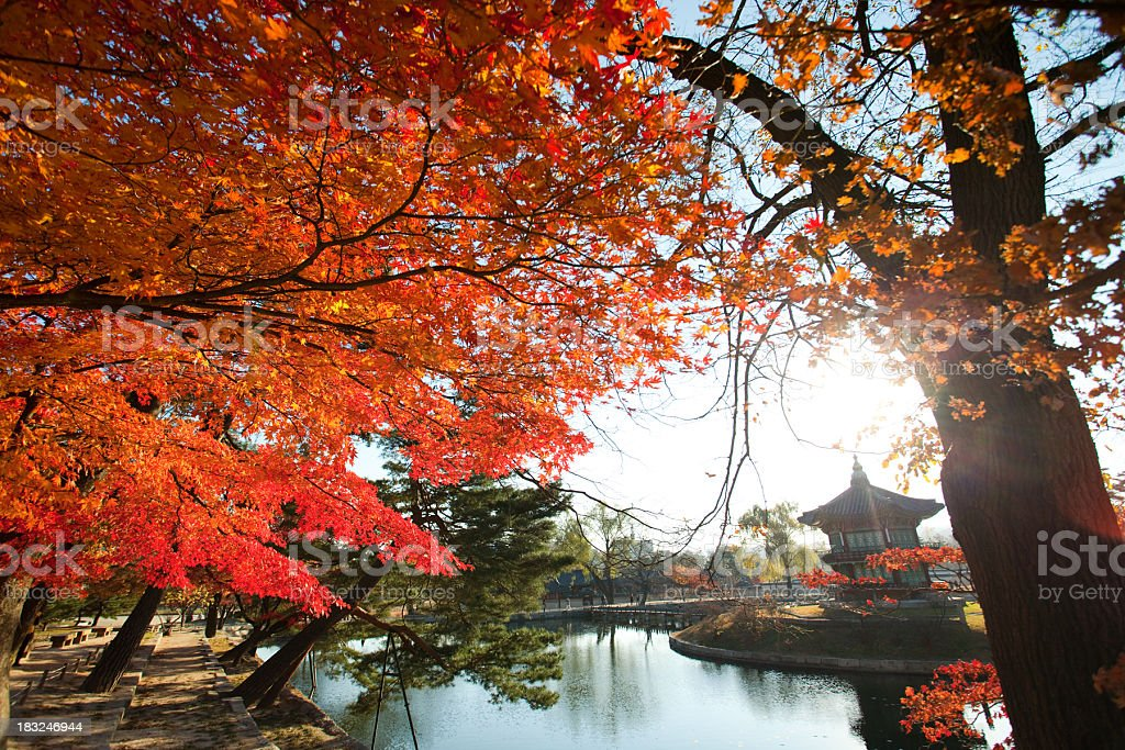 Maple leaves in oriental palace royalty-free stock photo