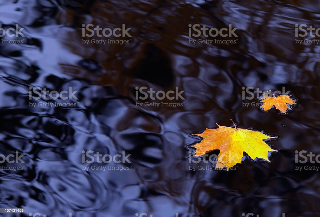 Maple leaves on water royalty-free stock photo