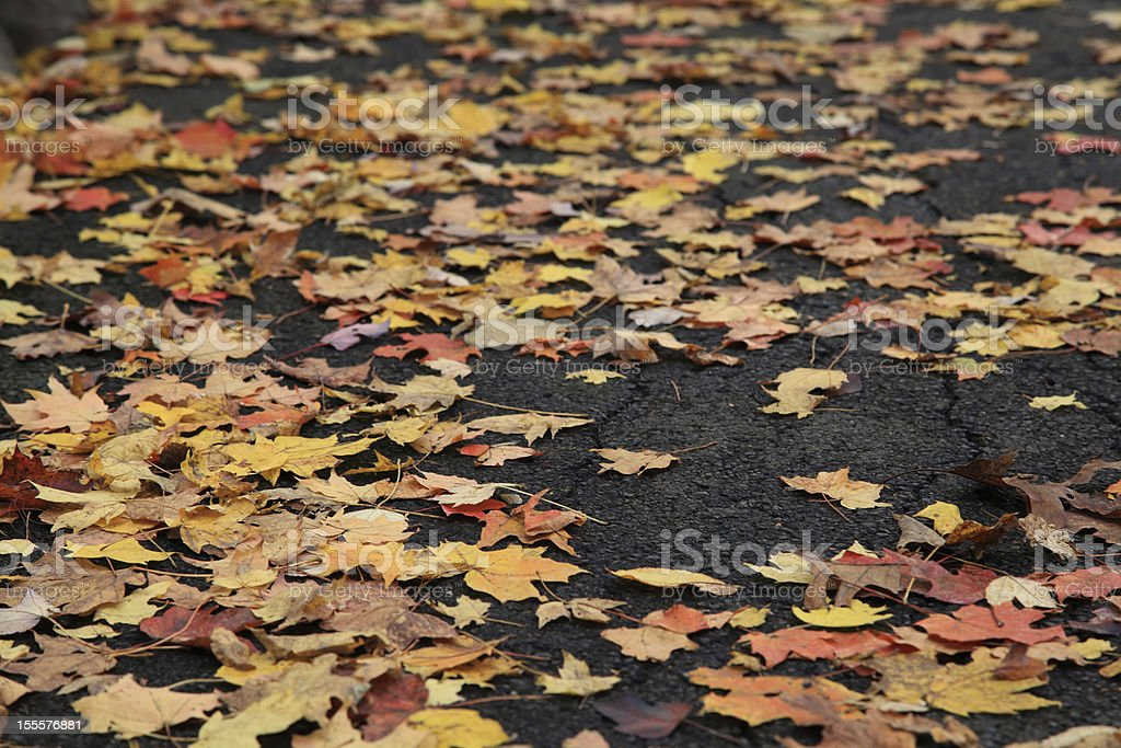Maple leaves scattered on road during fall season royalty-free stock photo