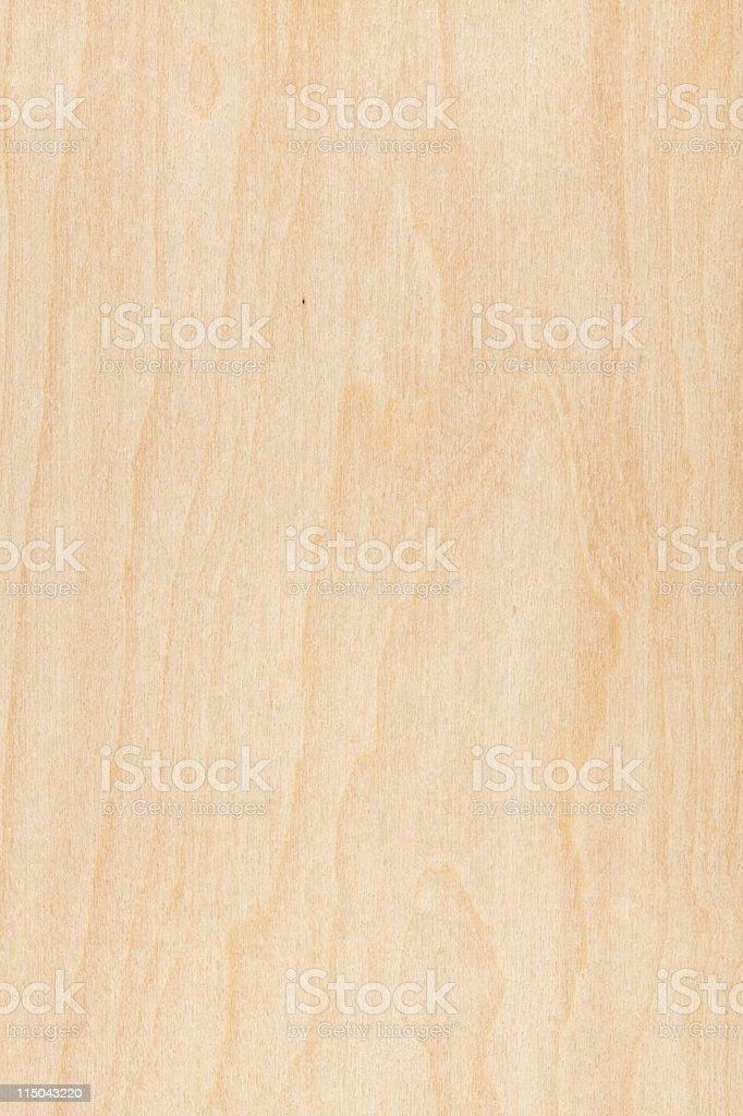 Maple stock photo