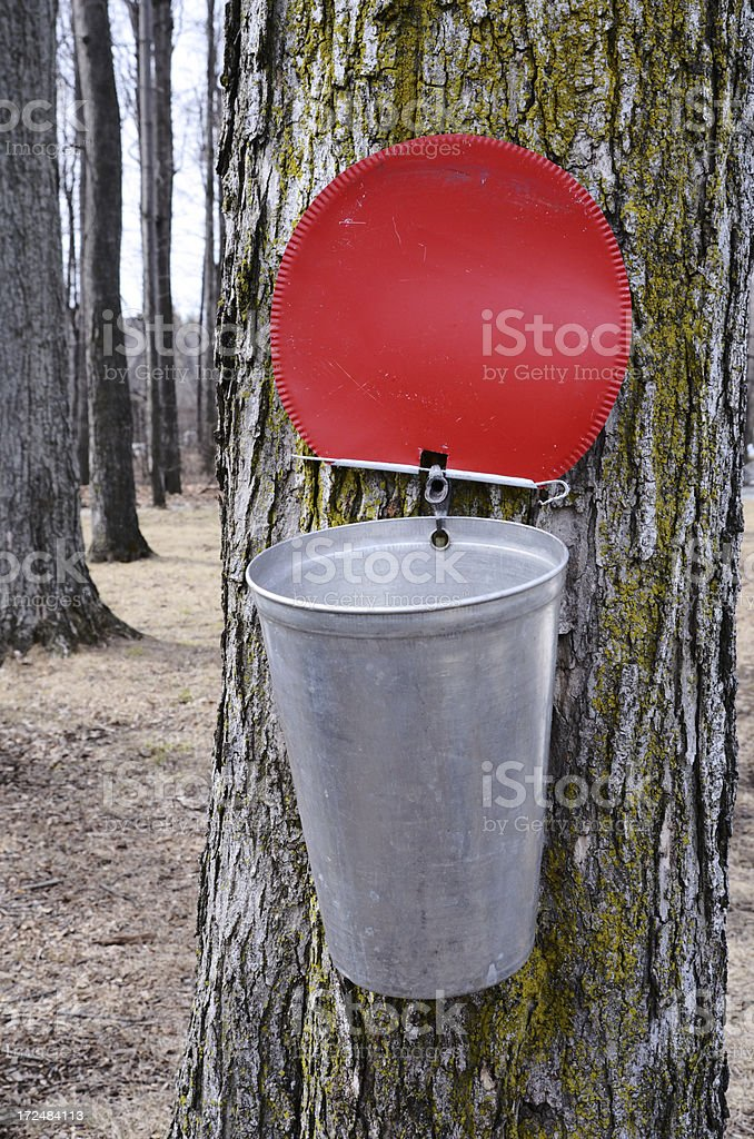 Maple Sap Bucket royalty-free stock photo