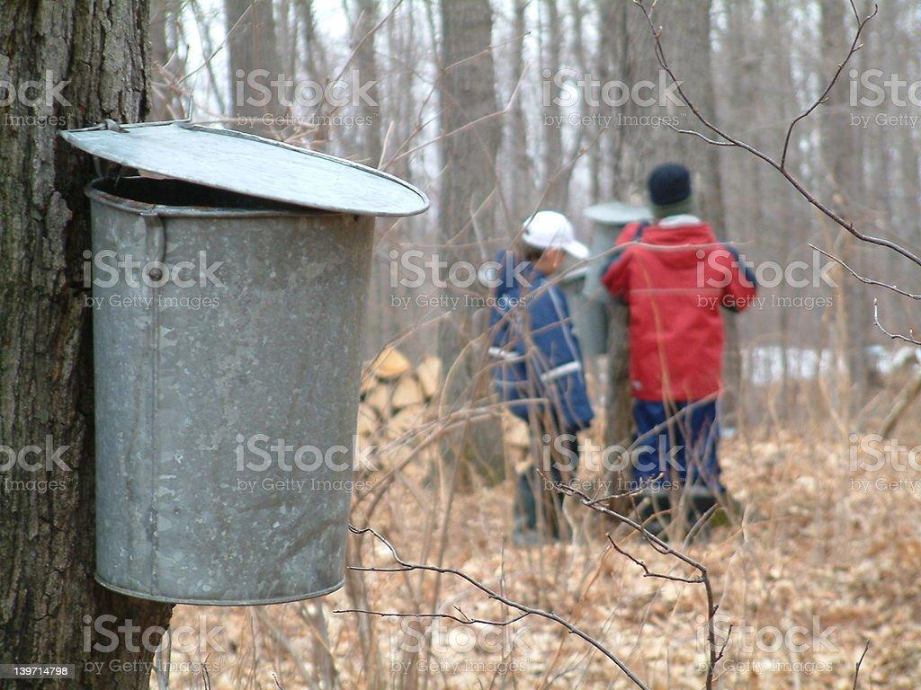 Maple sap inspectors stock photo