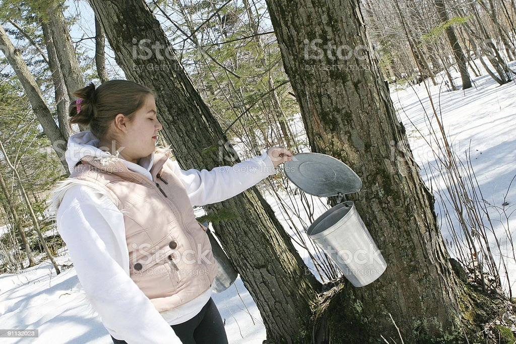 Maple season! stock photo