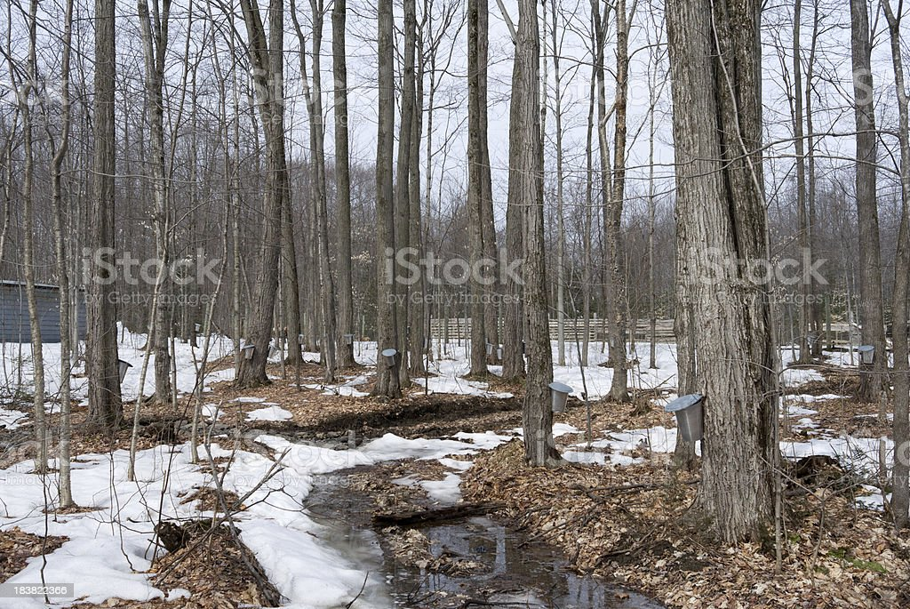 maple sirop industry royalty-free stock photo
