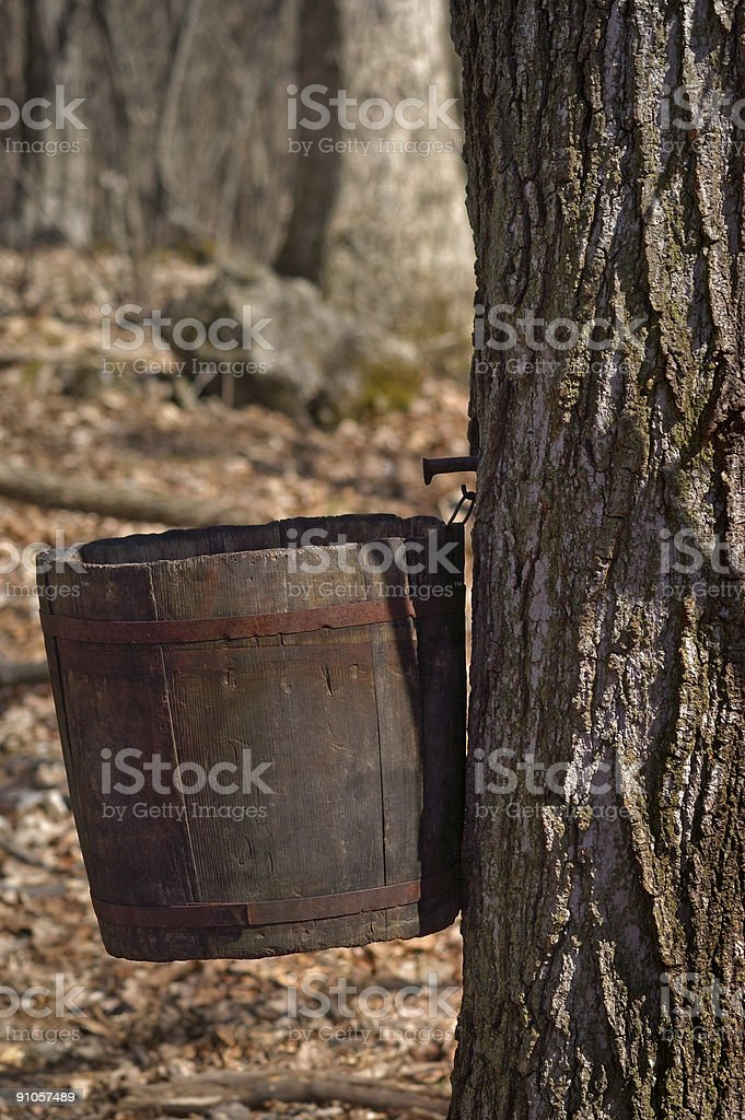 Maple Sugaring royalty-free stock photo