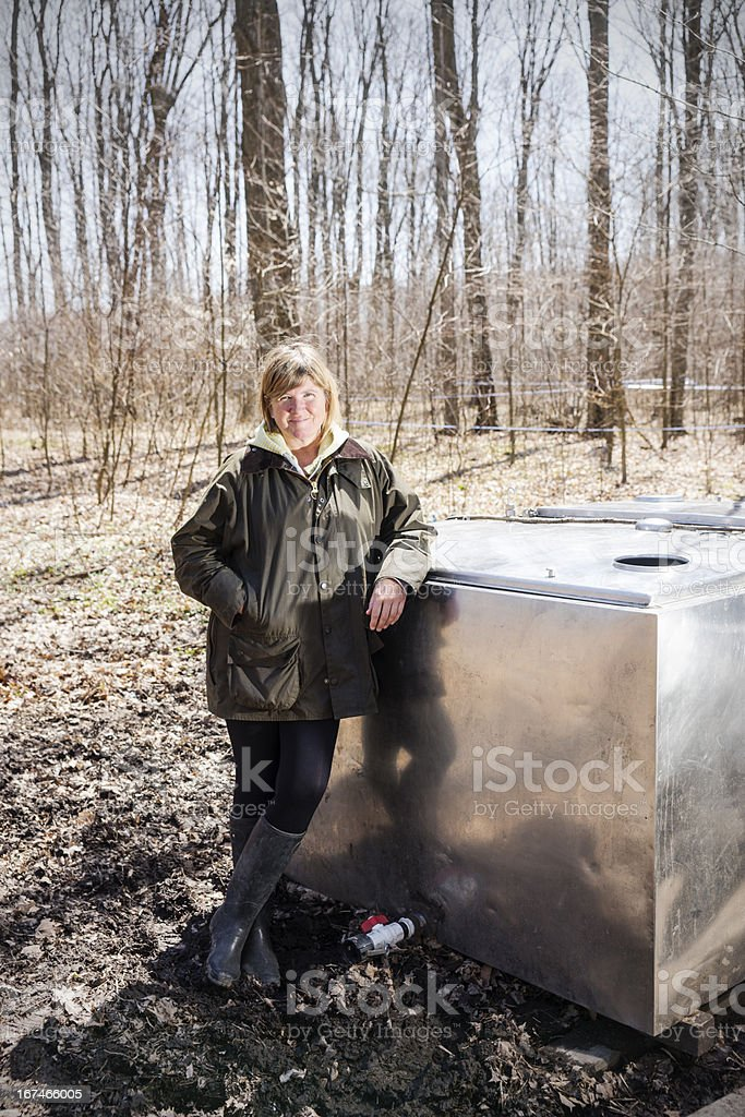 Maple syrup collection system in a northern forest royalty-free stock photo