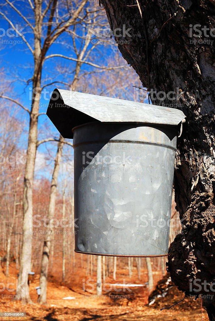 Maple Syrup Farm stock photo