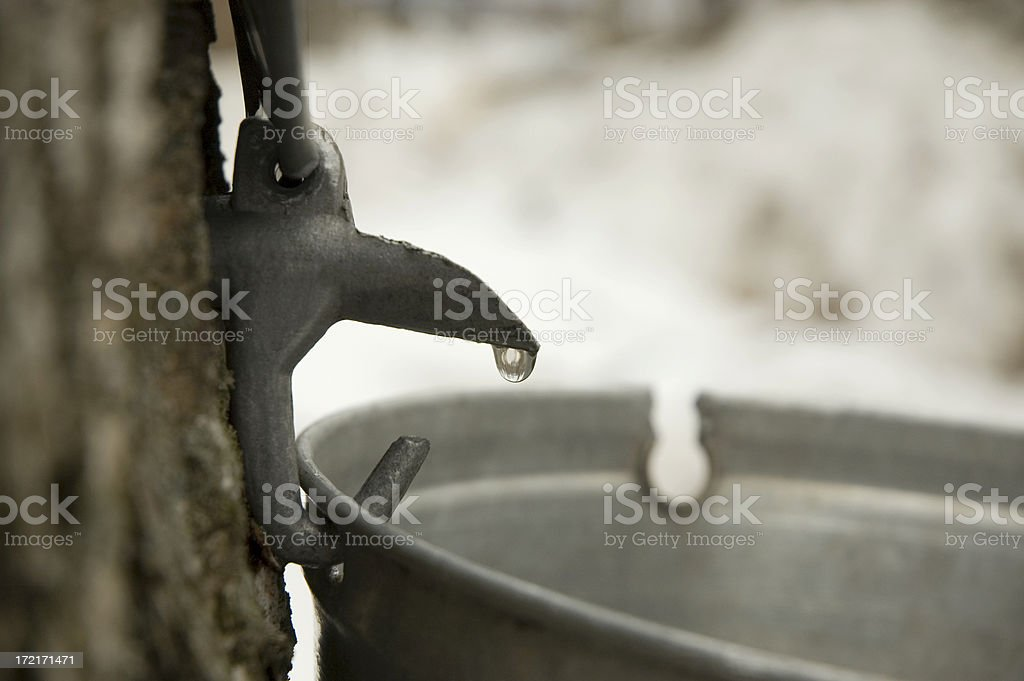 Maple syrup flowing stock photo