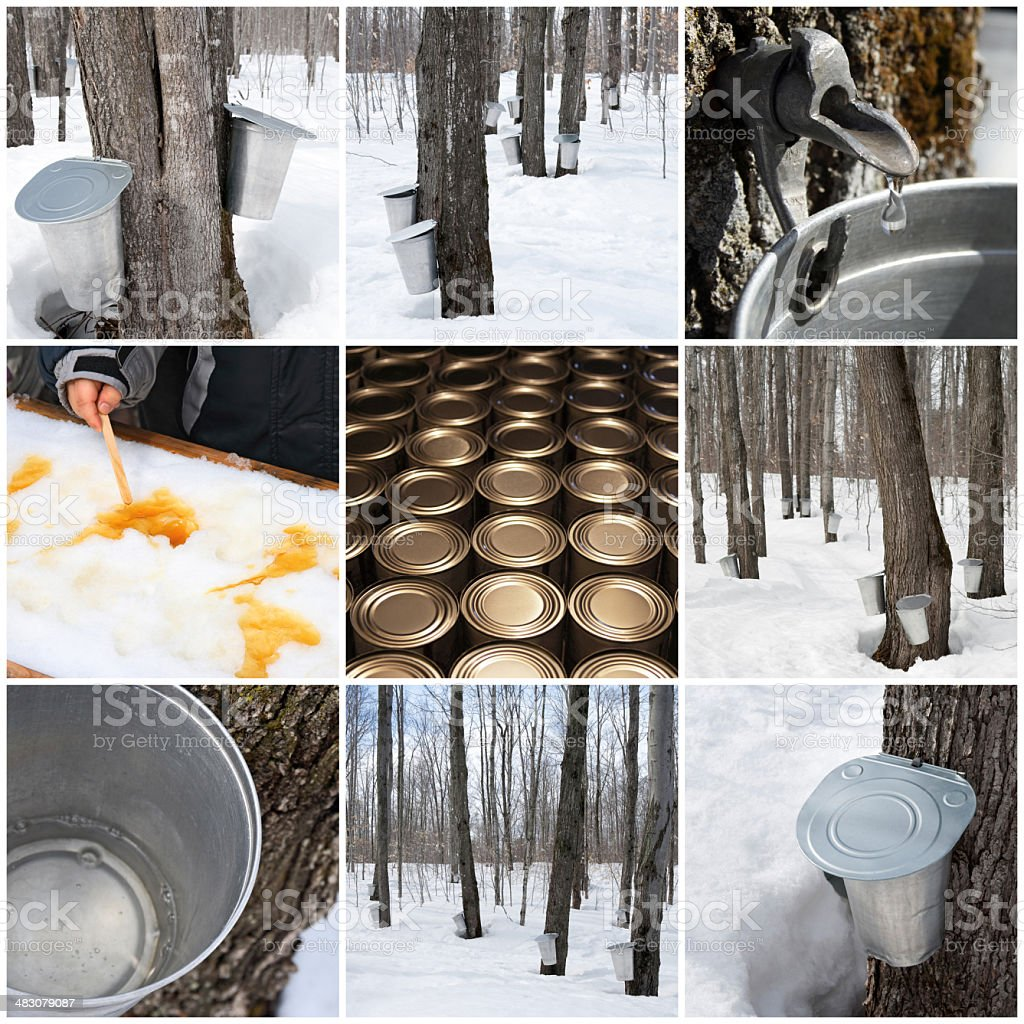 Maple syrup production stock photo