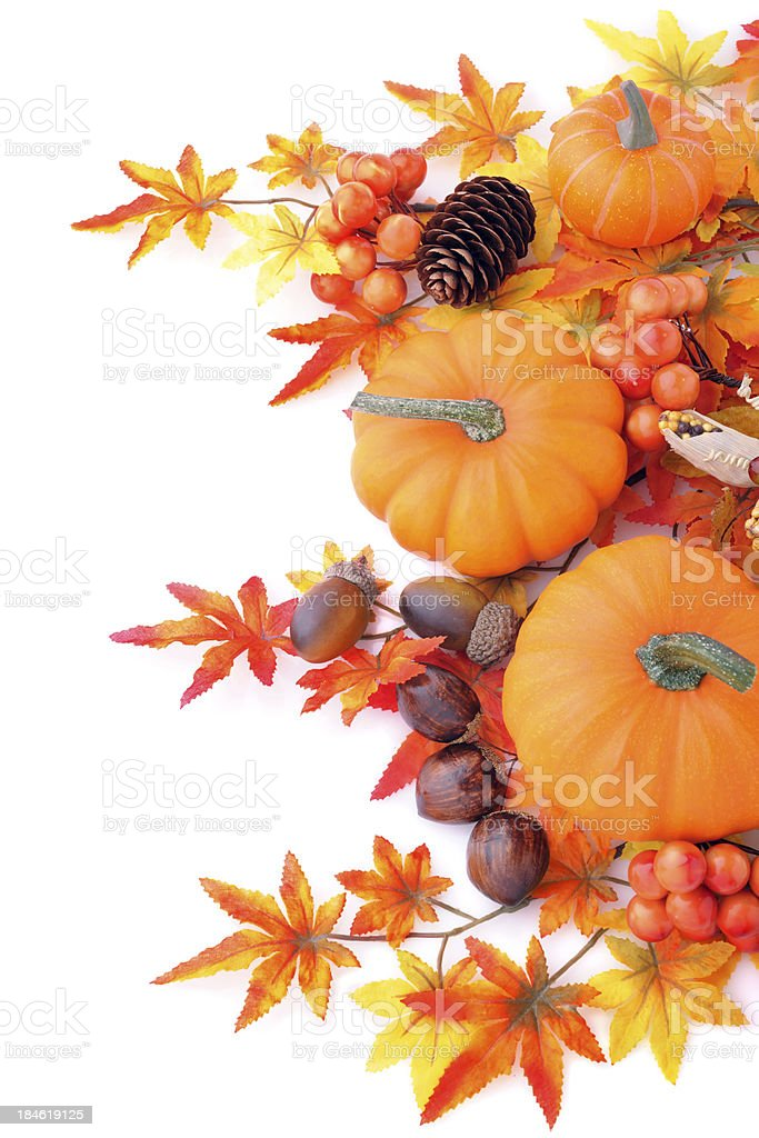 Maple tree and pumpkins stock photo
