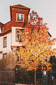 Maple tree in front of luxury French house
