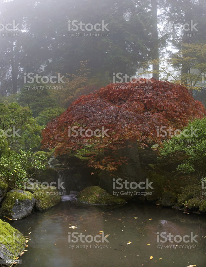 Maple Tree Over Waterfall at Japanese Garden royalty-free stock photo