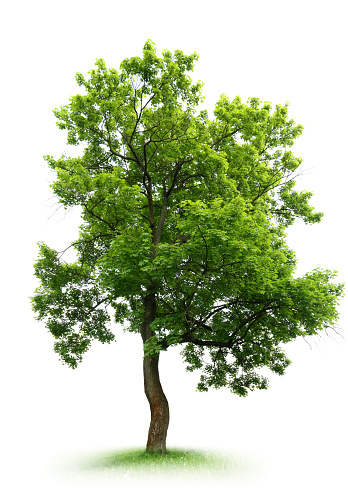 Pictures Of Tree 77