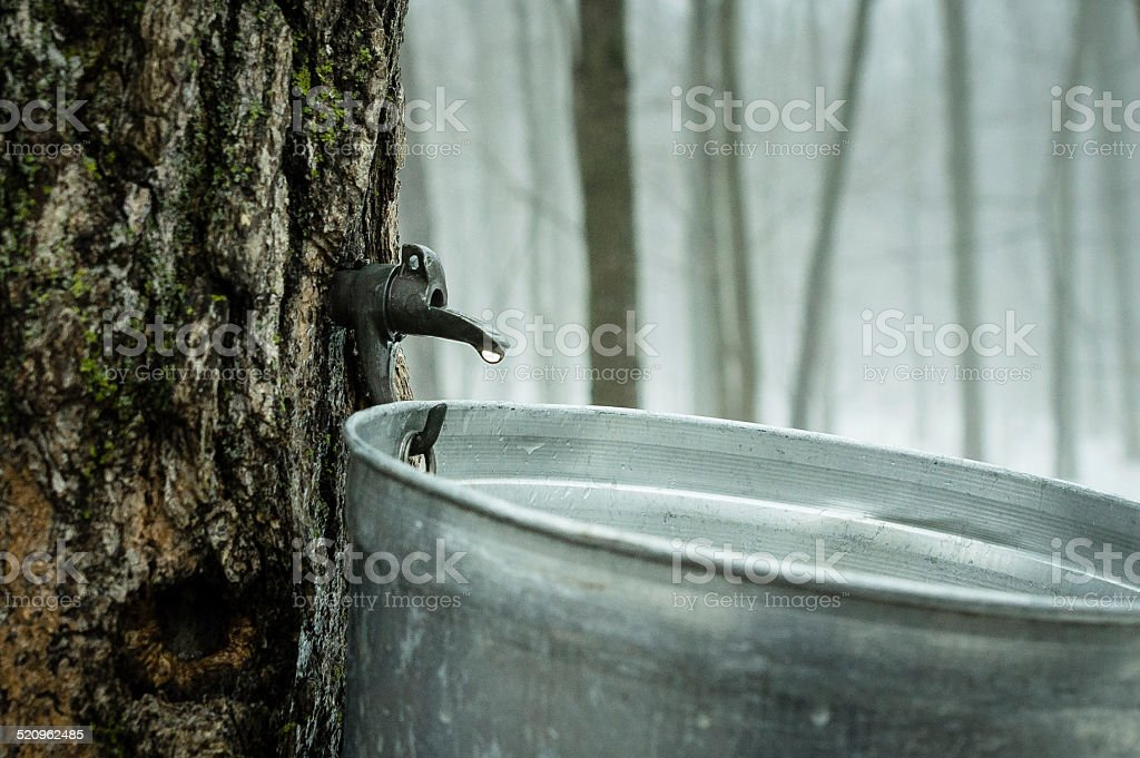 Eau d'?rable stock photo
