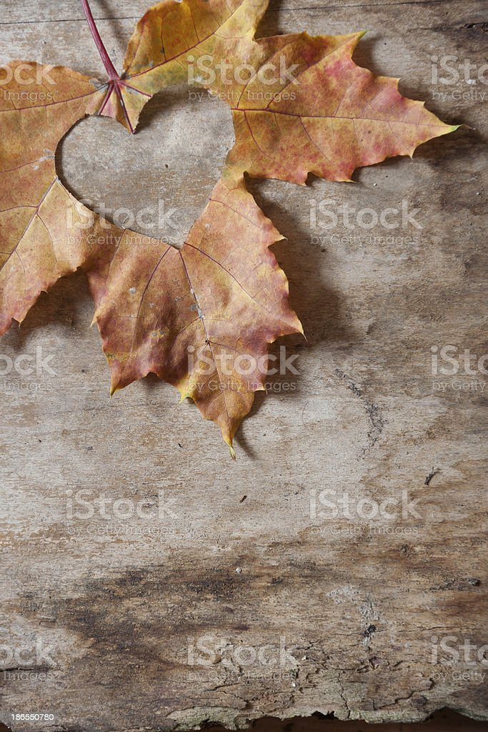 Maple-Leaf to cut heart on the tree royalty-free stock photo