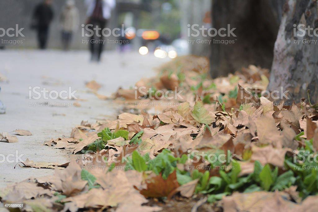 Maples nahe road Lizenzfreies stock-foto