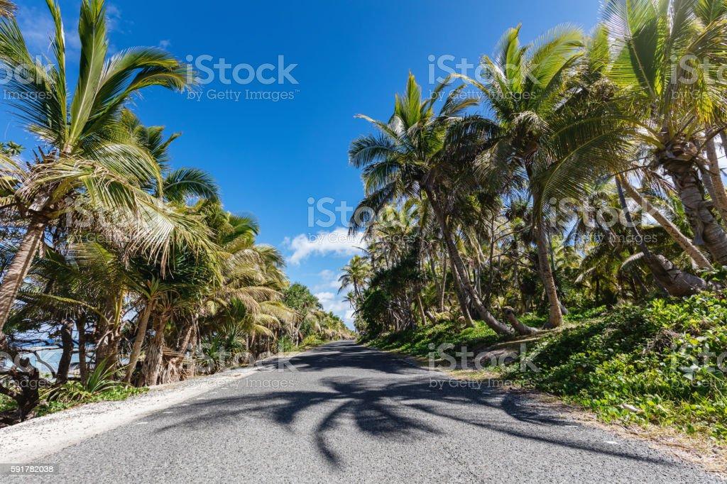 Maré Island Street Palm Tree Alley New Caledonia stock photo