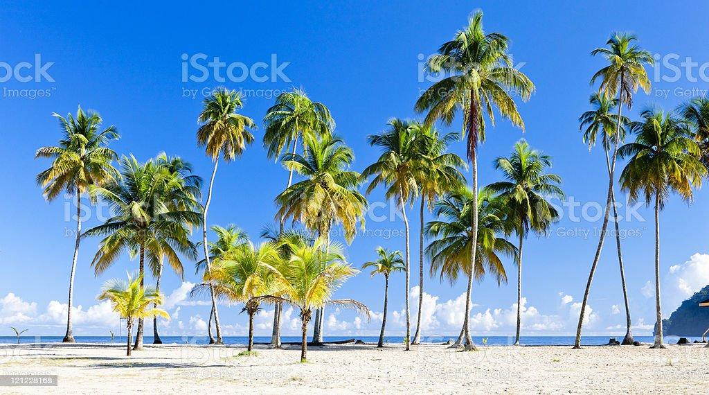 Maracas Bay royalty-free stock photo