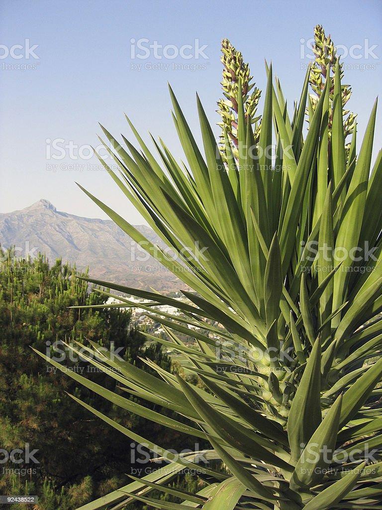 marbella mountain royalty-free stock photo