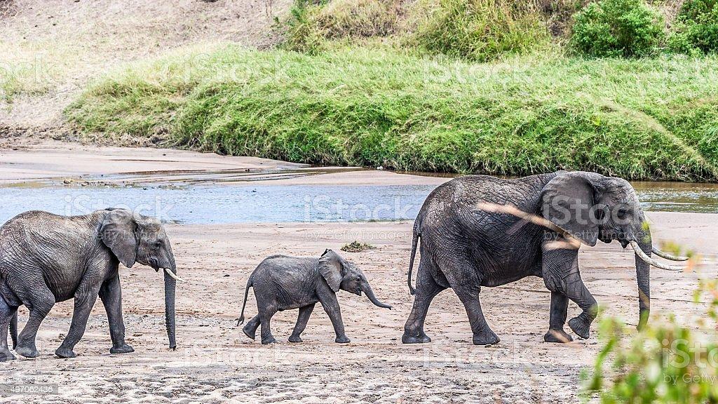 Marsch in der Masai Mara stock photo