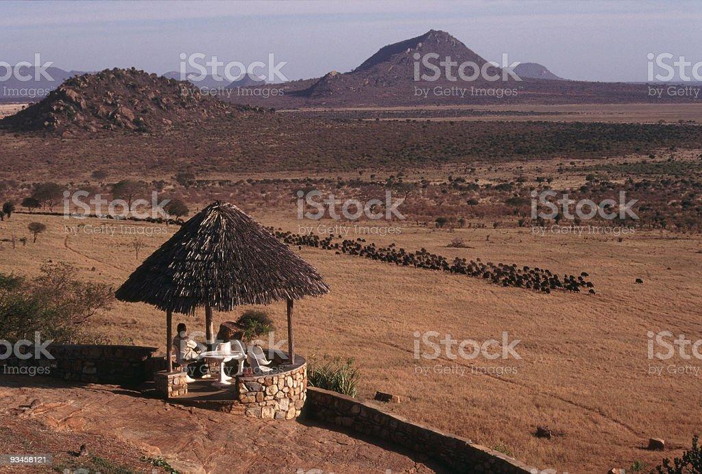 March of the Buffalo, Tsavo East NP, Kenya stock photo