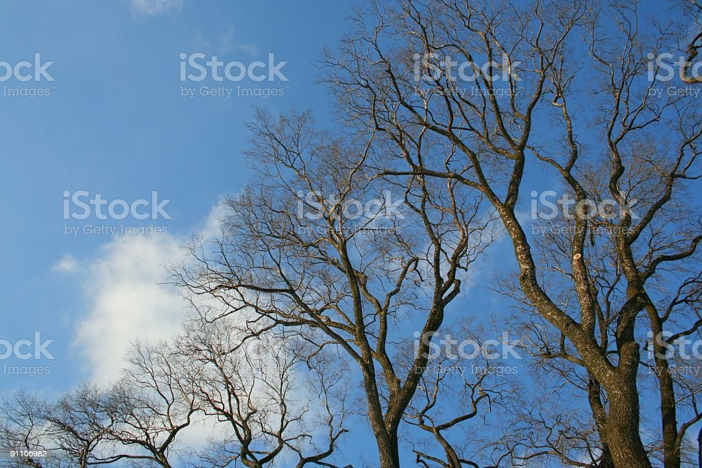 march royalty-free stock photo