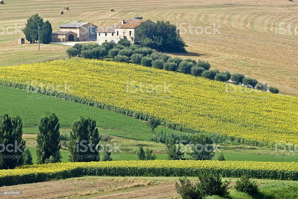 Marche (Italy): Farm. Country landscape at summer royalty-free stock photo