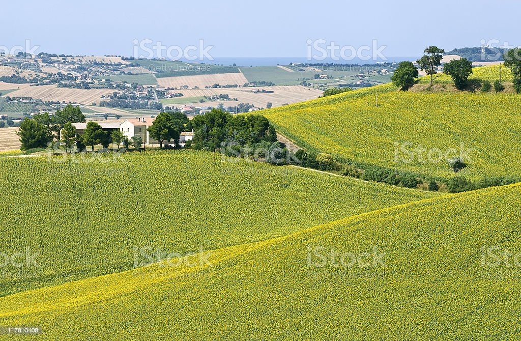 Marches (Italy) - Landscape at summer royalty-free stock photo