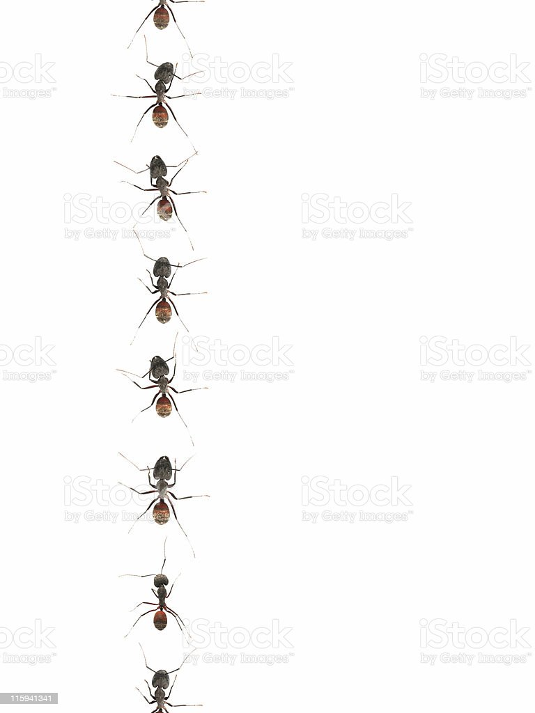 Marching ants 01 stock photo