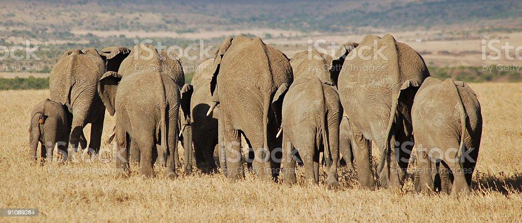 Marching elephants royalty-free stock photo