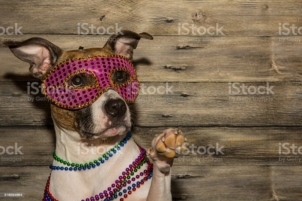 Mardi Gras Dog stock photo