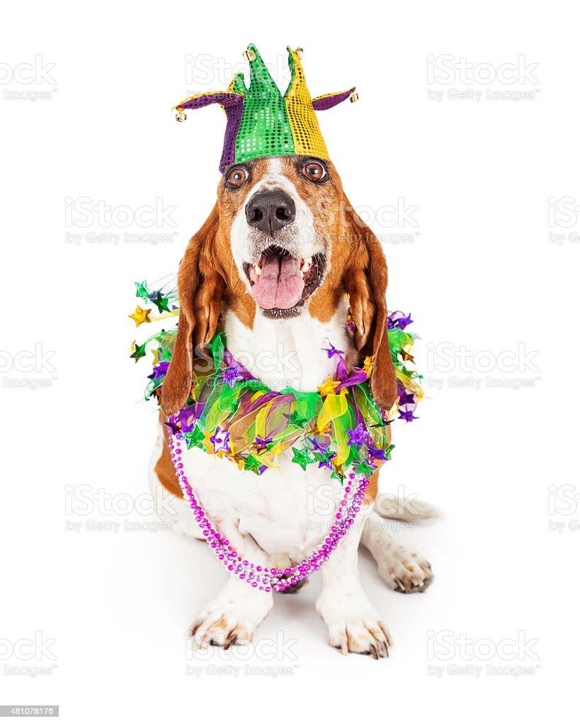 Mardi Gras Party Dog stock photo