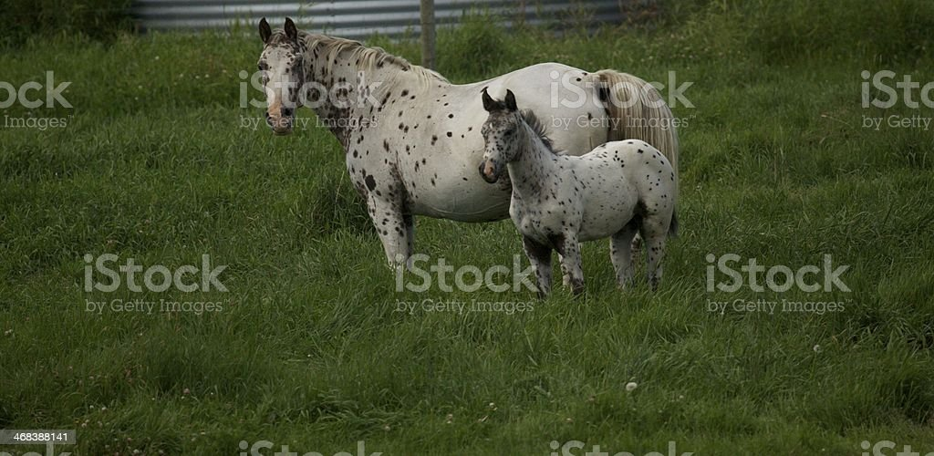 mare and foal, horses royalty-free stock photo
