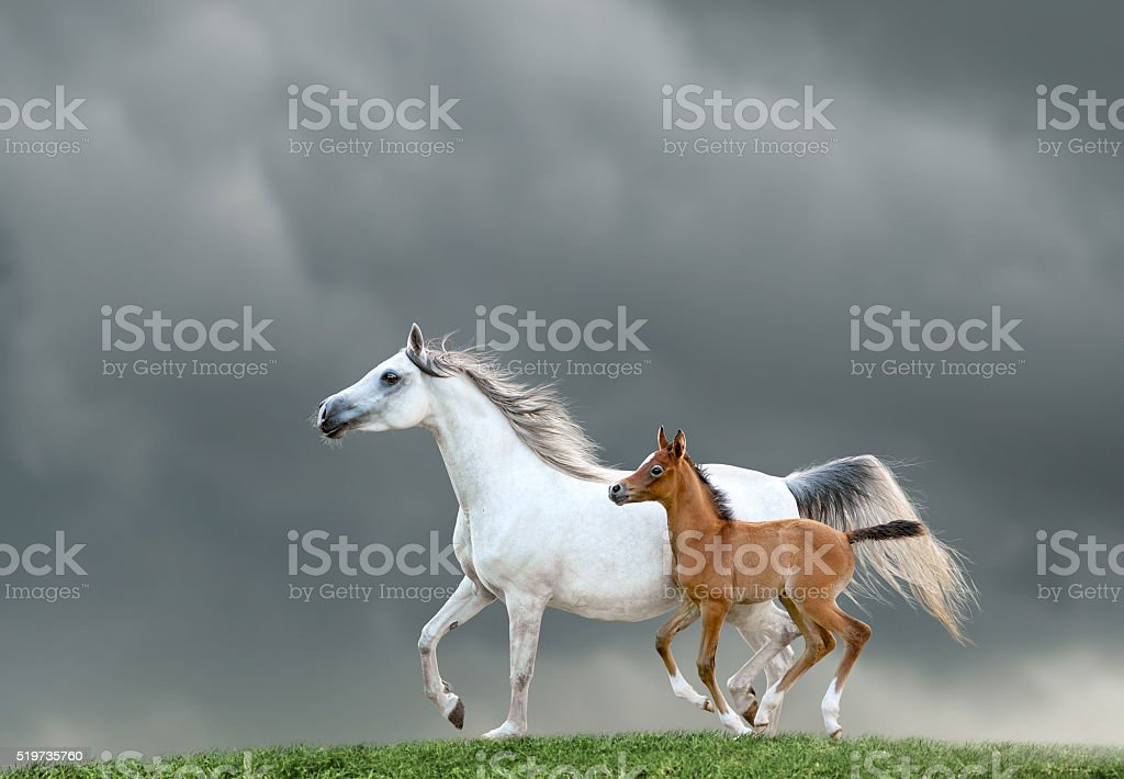 mare and foal on a green hill stock photo