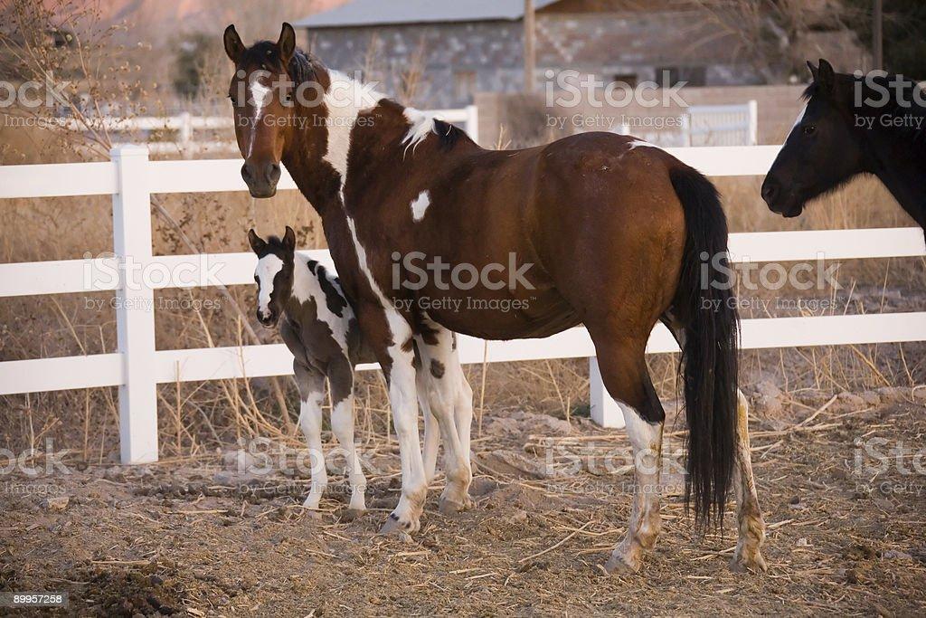 Mare con Pony foto stock royalty-free