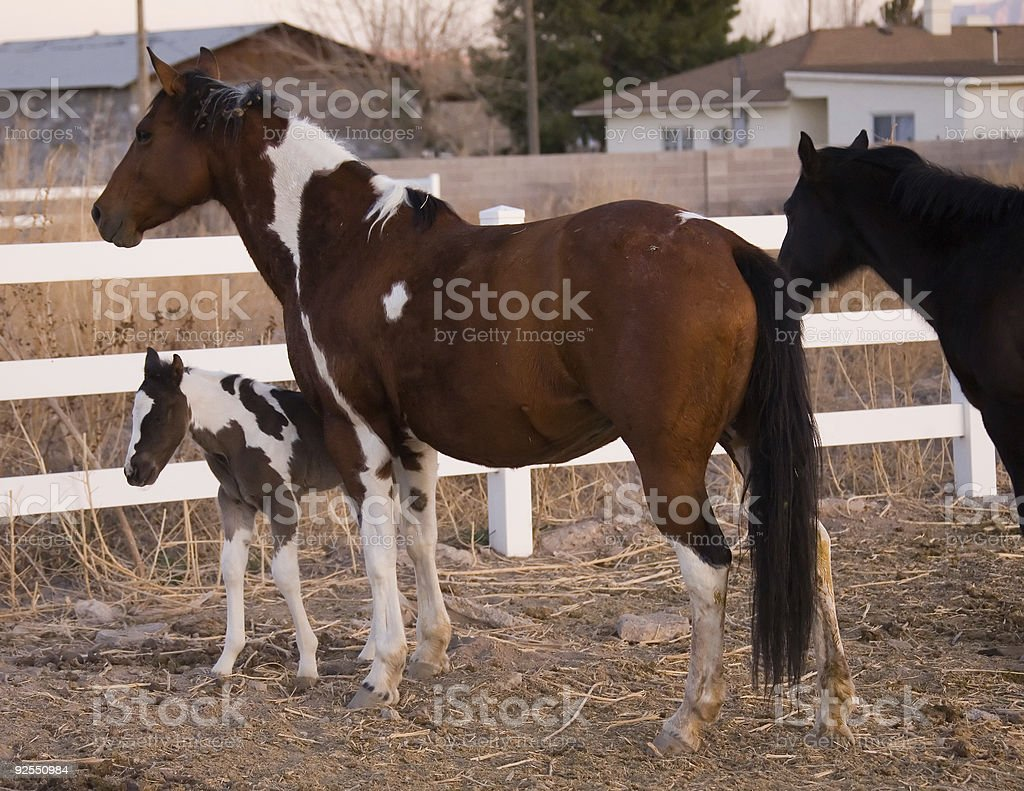 Mare con Pony foto stock royalty-free