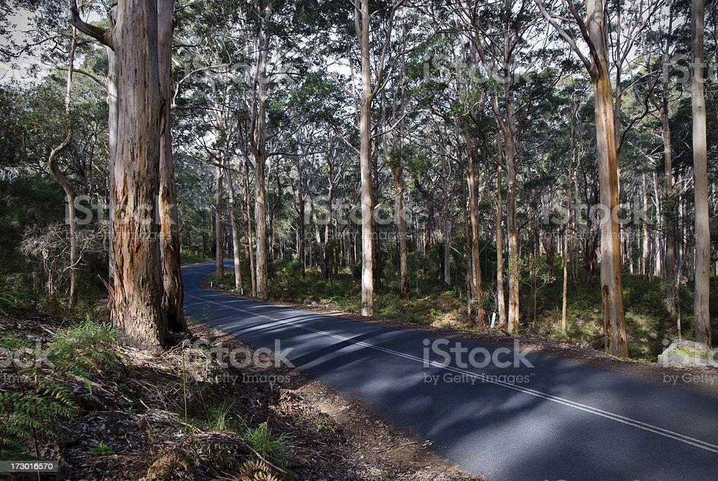 Margaret River Tourist Drive, Boranup Forest stock photo