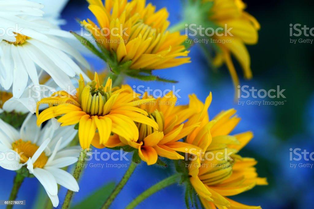 Marguerites and echinacea stock photo