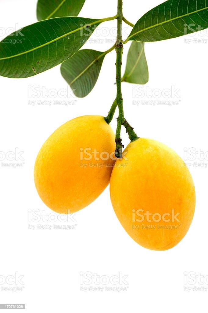 Marian plum fruit isolated on white background stock photo