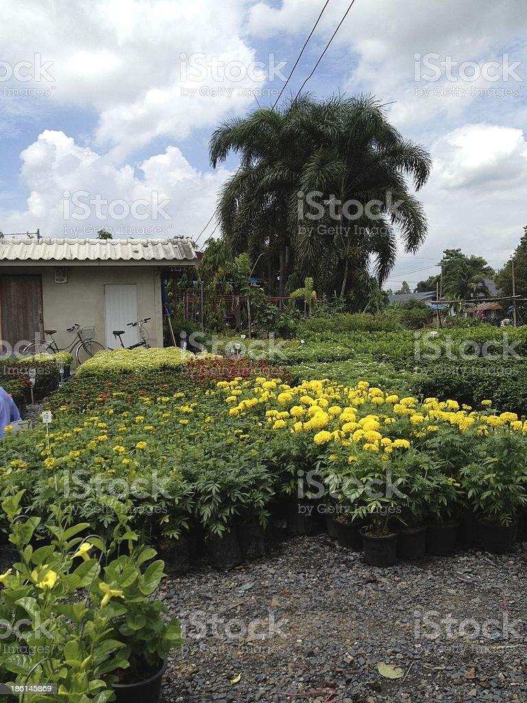 Календула цветок ферма открытый для продажи Стоковые фото Стоковая фотография