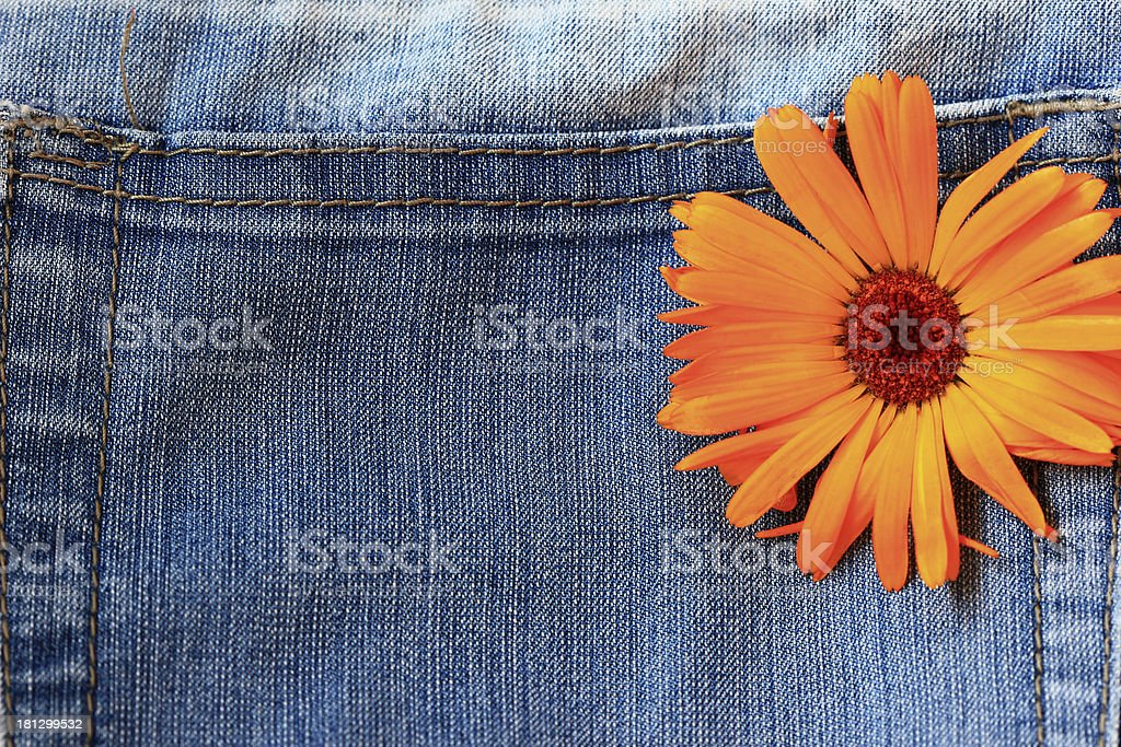 Marigold flower on a jeans background royalty-free stock photo