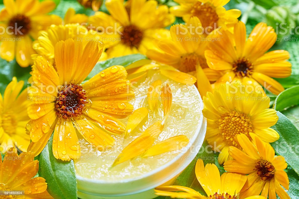 Marigold ointment and fresh marigold flowers. Natural ointment stock photo