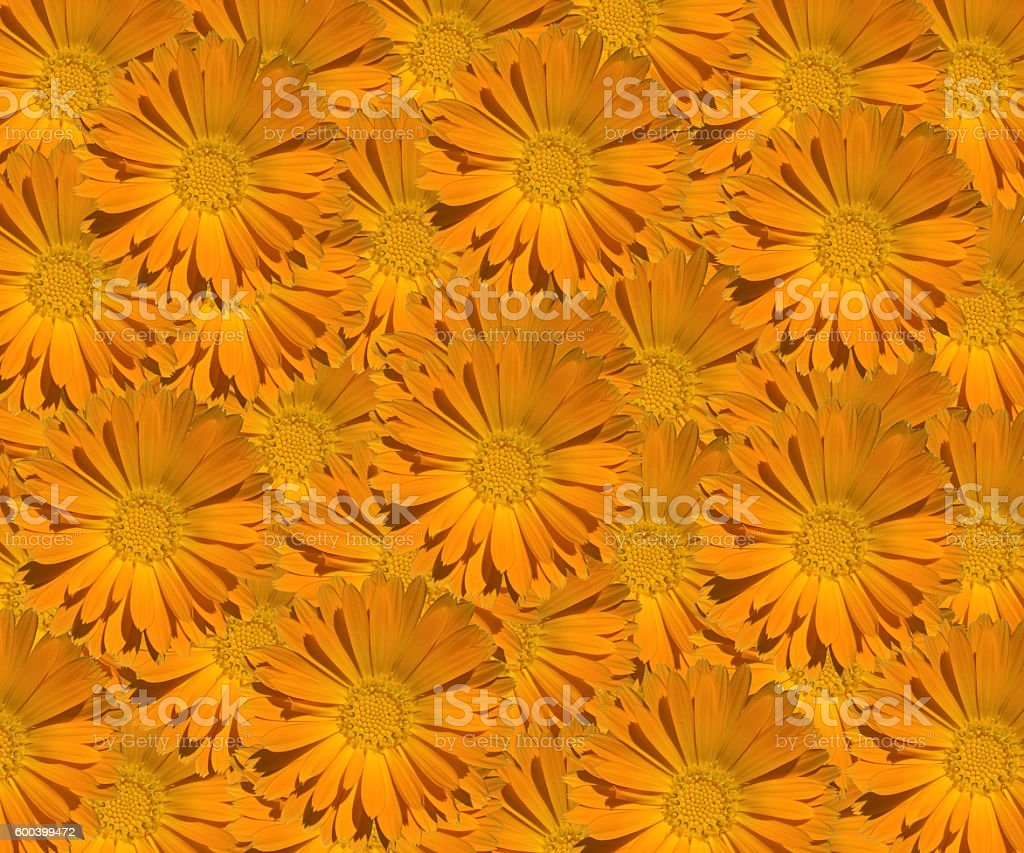 Marigold (Calendula) Pattern stock photo